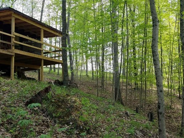 Wooded Ravine Cabin