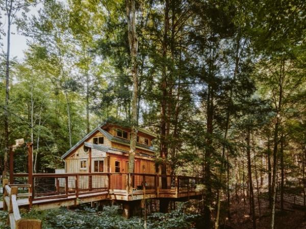 Maple Treehouse
